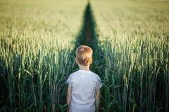 Position mignonne de petit garçon dans le domaine vert dans le jour d'été Vue arrière image libre de droits