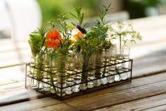 Position sur une table en bois avec des cônes de fleurs Images stock