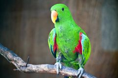 Position verte de macaw Images stock