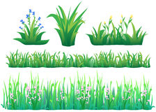 Positionnement d'herbe Image stock
