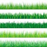 Positionnement d'herbe verte Sur le fond blanc Images libres de droits