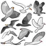 positionnement d'oiseau Images libres de droits