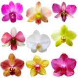 Positionnement d'orchidée Photos stock