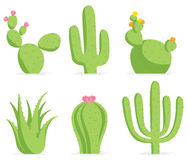 positionnement de cactus Illustration Libre de Droits