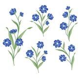 Positionnement de fleur Collection décorative d'été de bouquet floral Photographie stock