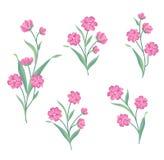 Positionnement de fleur Collection décorative d'été de bouquet floral pour le gree Photo stock