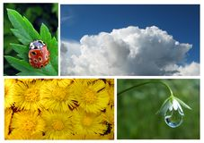 Positionnement de nature Photo libre de droits