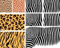 Positionnement de peau animale Images libres de droits
