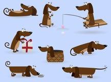 Positionnement drôle de dachshund Image stock