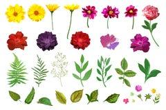 Positionnement floral Collection avec le jardin tiré par la main coloré d'isolement illustration de vecteur