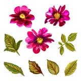 Positionnement floral Collection avec les fleurs et les feuilles tirées par la main Image libre de droits