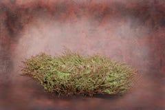 Positionnement floral de studio d'imagination d'emboîtement d'oiseau de chéri (client d'isolement par garniture intérieure) Photo stock