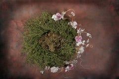 Positionnement floral de studio d'imagination d'emboîtement d'oiseau de chéri (client d'isolement par garniture intérieure) Photographie stock