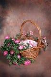 Positionnement floral de studio d'imagination de panier de Pâques (client d'isolement par garniture intérieure) Images libres de droits