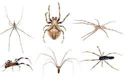 Positionnement toxique d'araignée Photographie stock libre de droits