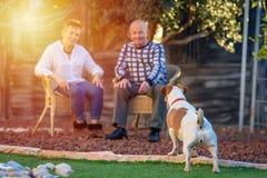 Positiv bild av lyckliga pensionärer som spelar i hund royaltyfria bilder