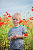 Positive boy in field with red poppies Royalty Free Stock Photos