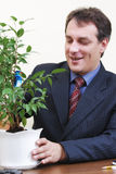 Positive businessman watering plant Stock Photography