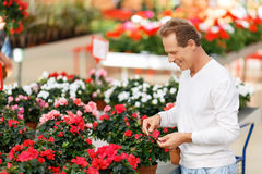 Positive customer choosing flowers Royalty Free Stock Photography