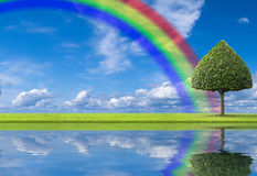 Positive day. A beautiful landscape with green tree and rainbow for a good spirits Royalty Free Stock Image