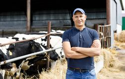 Positive farmer with cows. At farm royalty free stock photo
