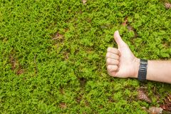 Positive feelings about nature topics Stock Images