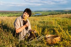 Positive fifty year old woman collects grass on meadow against Royalty Free Stock Images