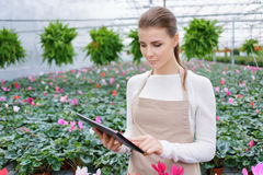 Positive florist working in the greenhouse Stock Images