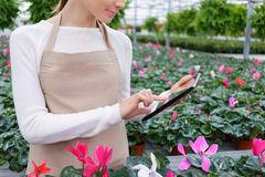 Positive florist working in the greenhouse Stock Photo