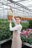 Positive florist working in the greenhouse Royalty Free Stock Photography