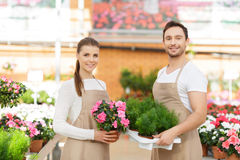 Positive florists working together Royalty Free Stock Image