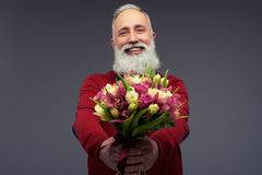 Positive middle-aged man with a beard in red sweater wi. Close-up shot of positive middle-aged man with a beard in red sweater with a bouquet of tulips. Male Royalty Free Stock Images
