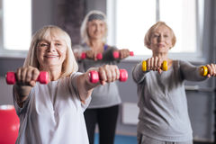 Positive persistent women trying to lose some weight. More exercises. Positive persistent nice women standing together and working out  dumbbells while trying to Stock Photos