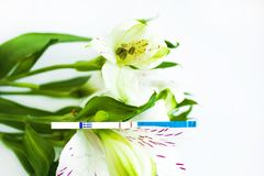 Positive pregnancy test with a bouquet of white alstroemeria flowers. Peruvian lilies. Planning and waiting for a child, good news, surprise for future parents royalty free stock images