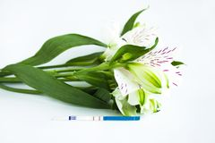 Positive pregnancy test with a bouquet of white alstroemeria flowers. Peruvian lilies. Planning and waiting for a child, good news, surprise for future parents stock photo