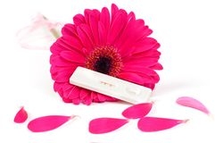 Positive pregnancy test and gerbera. Shot of positive pregnancy test and gerbera stock images