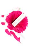 Positive pregnancy test and gerbera. Shot of positive pregnancy test and gerbera flower royalty free stock photo