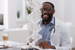 Positive professional scientist studying DNA. Human body. Positive professional smart scientist sitting at the table and looking at the DNA model while studying Royalty Free Stock Photo