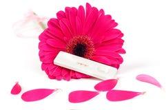 Positive Schwangerschaftprüfung und Gerbera stockbilder