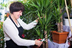 Positive shop assistant displaying yucca palms Stock Photo