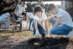 Positive smart boys planting a tree. Planet conservation. Positive nice smart boys sitting together and planting a tree while caring about the environment stock image