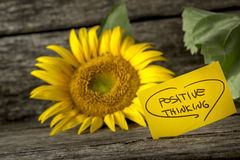 Positive thinking message next to a beautiful blooming yellow sunflower royalty free stock photo