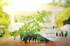 Positive thinking words written at white mug on the wooden table against leaf and sun flare with blurry bokeh background.  royalty free stock photography