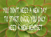 Free Positive Uplifting Mindset Quote On A Green Succulent Plant Ba Royalty Free Stock Photography - 123966957