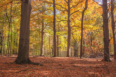 Positive vibes autumn forest. Iridescent colors of autumn beech forest. The magical atmosphere of the forest Stock Photo