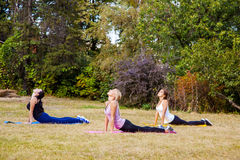 Positive women doing sport exercises. Royalty Free Stock Photo
