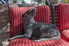 Posizione del cane fotografia stock libera da diritti