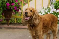 Posizione del cane immagine stock