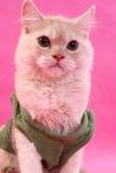Posizione del gattino Immagine Stock