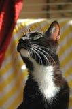 Posizione del gatto Immagini Stock Libere da Diritti